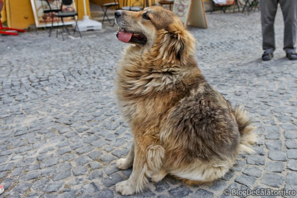 Jimmy-Sighisoara-02